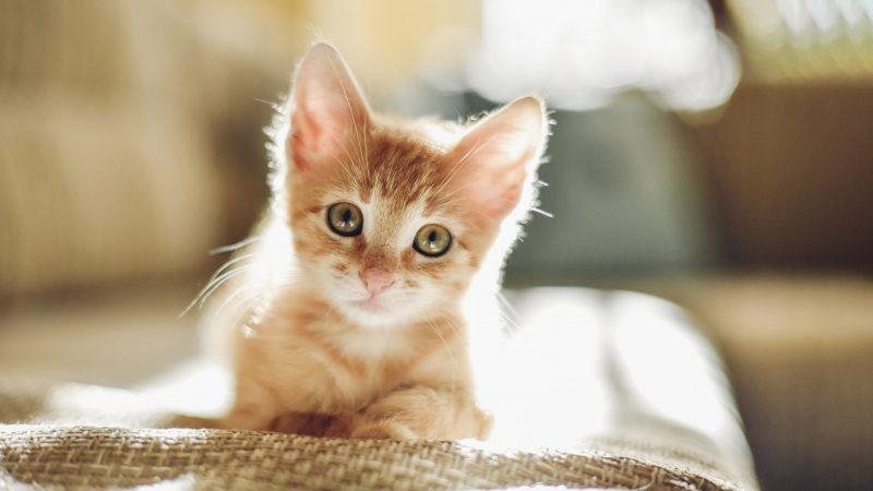 Charming Kitten Returns With Whatsapp, Linkedin Effort And Hard Work