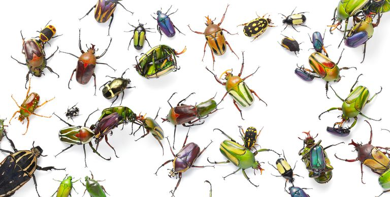 Record Levels Of Software Bugs Plague Short Staffed It Teams In