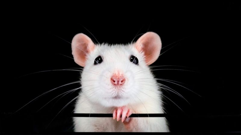 nanocore rat scurries past email defenses with .zipx tactic