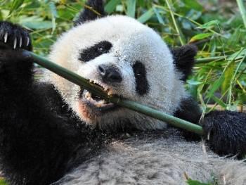 new crypto stealer 'panda' spread via discord