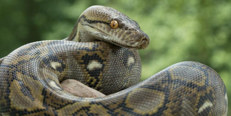 cryptominers slither into python projects in supply chain campaign