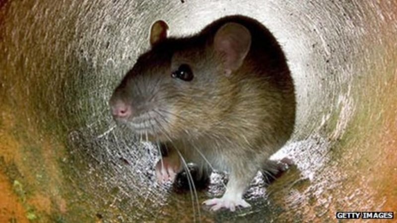 biopass rat uses live streaming steal victims' data