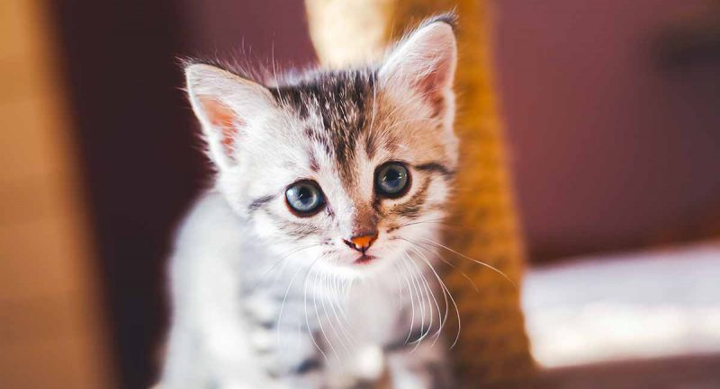 black hat: charming kitten leaves more paw prints