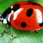 tiktok, github, facebook join open source bug bounty